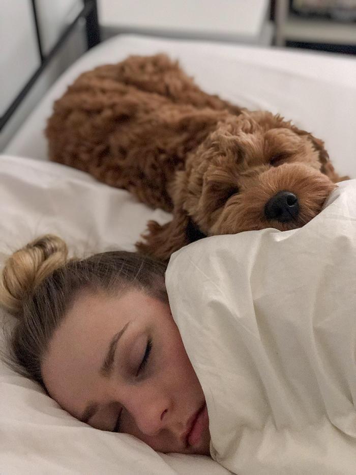 dog sleeping beside owner's wife