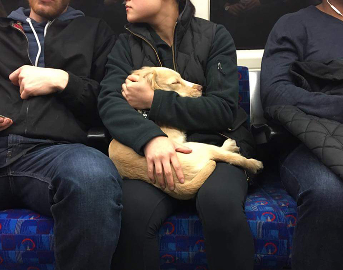 dog with owners aboard the train
