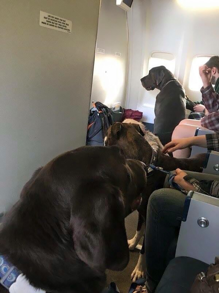 dogs on fort mcmurray fire evacuee flight