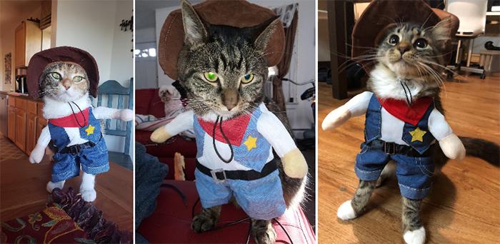 funny cowboy cat costume