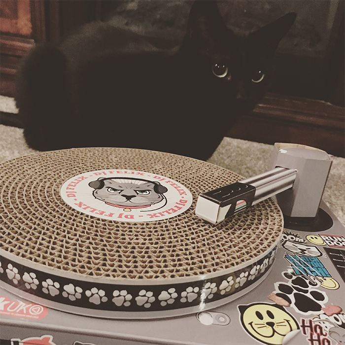 funny dj cat scratching pad