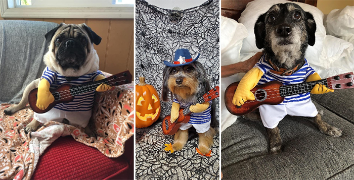 funny outfit for dogs guitar