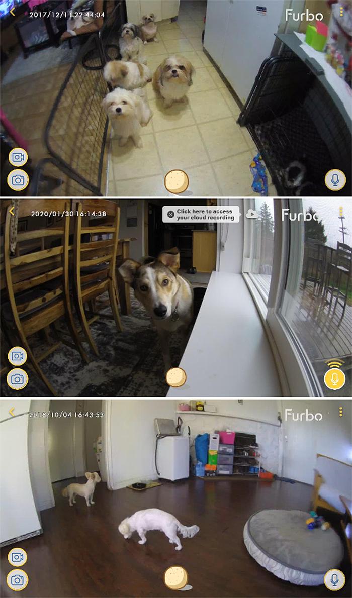furbo pet cam app phone footages