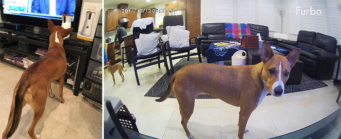 furbo pet cam real time footage