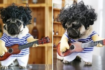 guitarist dog costume