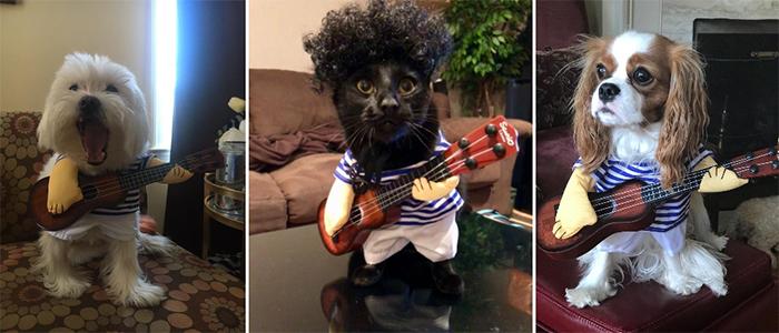 guitarist dog costume cat