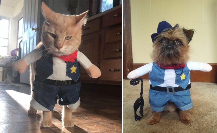hilarious western style pet outfit