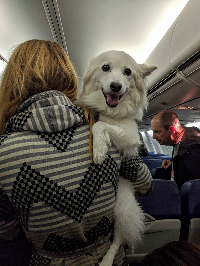 lady carrying dog on plane