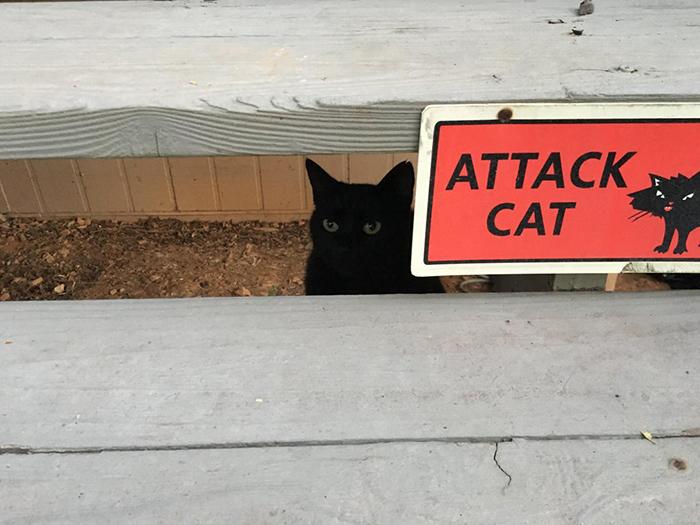 pet owner warning sign attack kitten