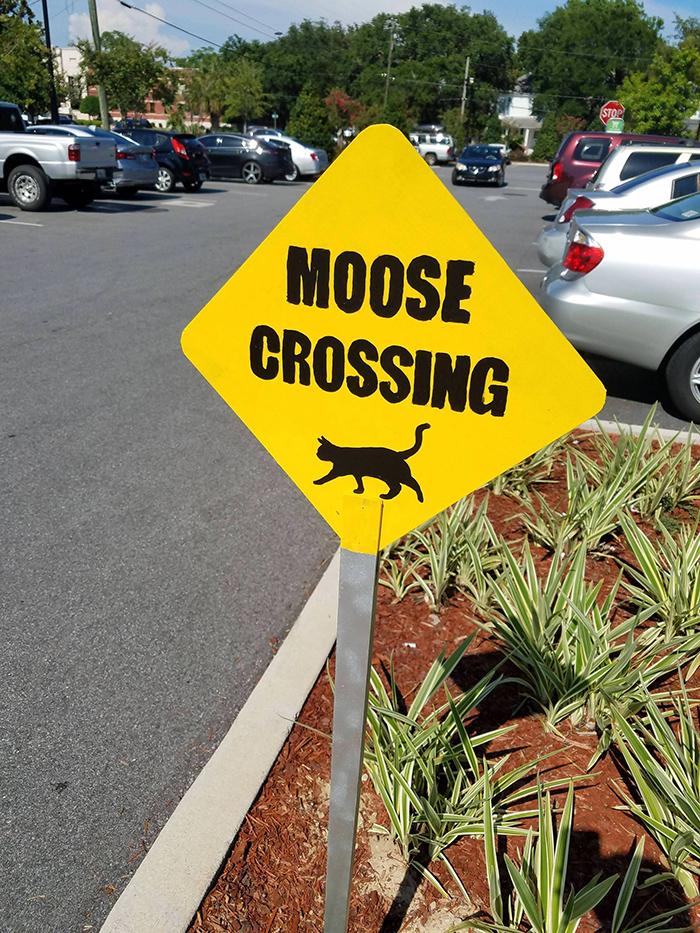 pet owner warning sign cat crossing