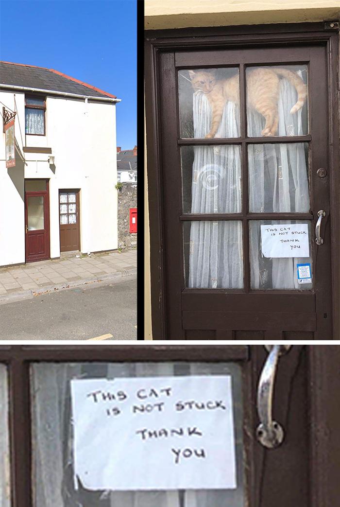 pet owner warning sign cat not stuck