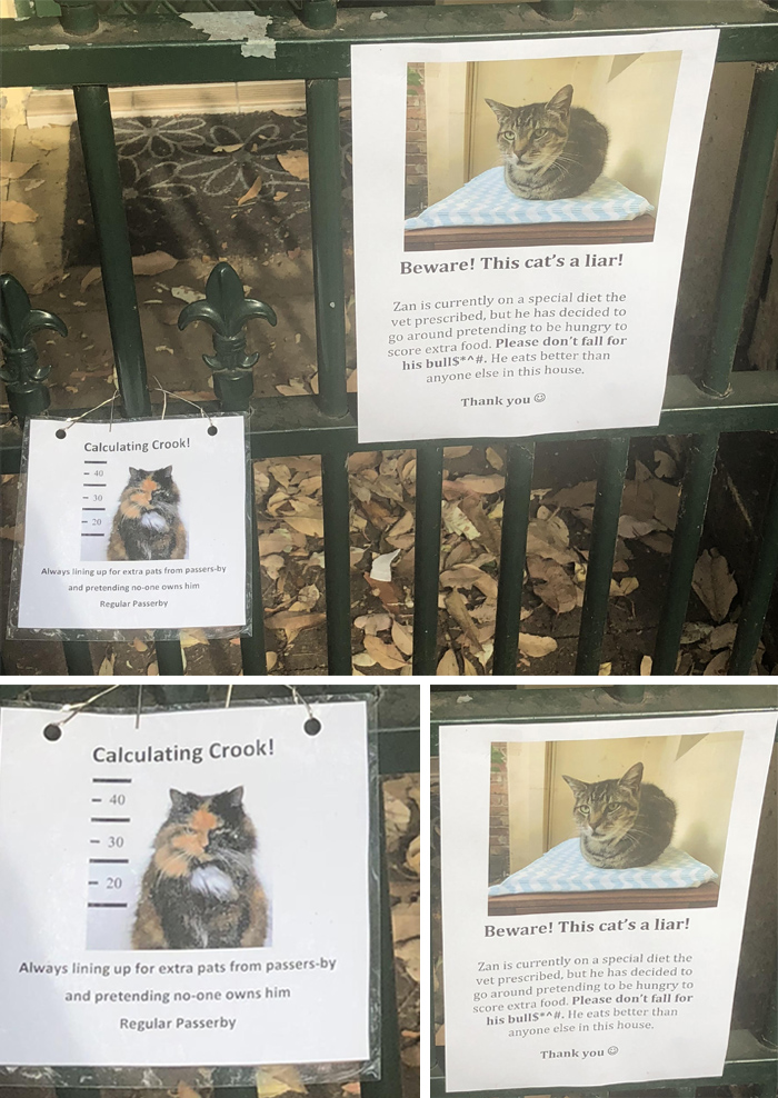 pet owner warning sign cat on special diet