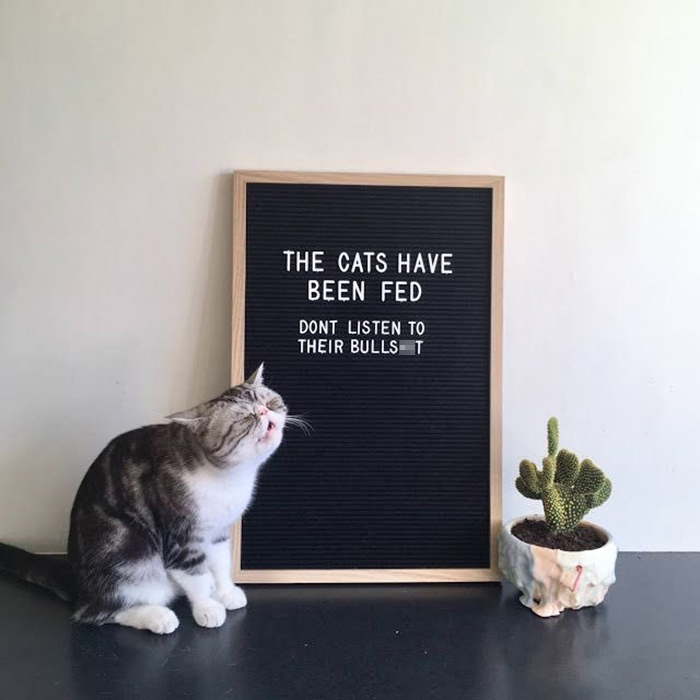 pet owner warning sign cats have been fed