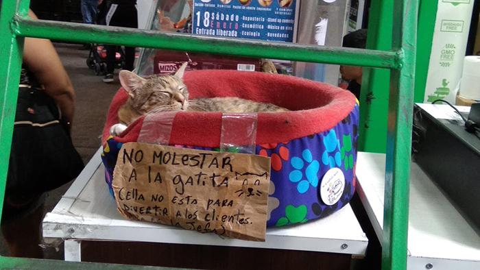 pet owner warning sign don't disturb cat