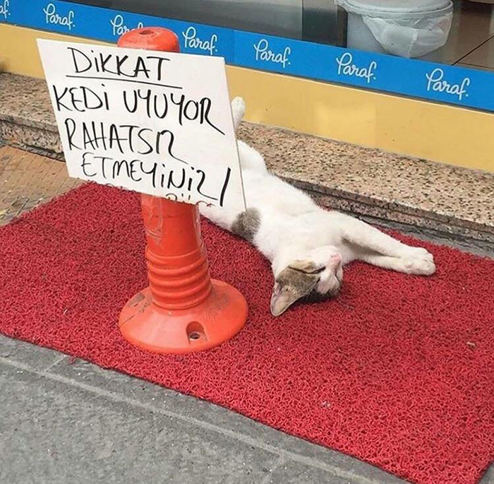 pet owner warning sign don't disturb sleeping kitten
