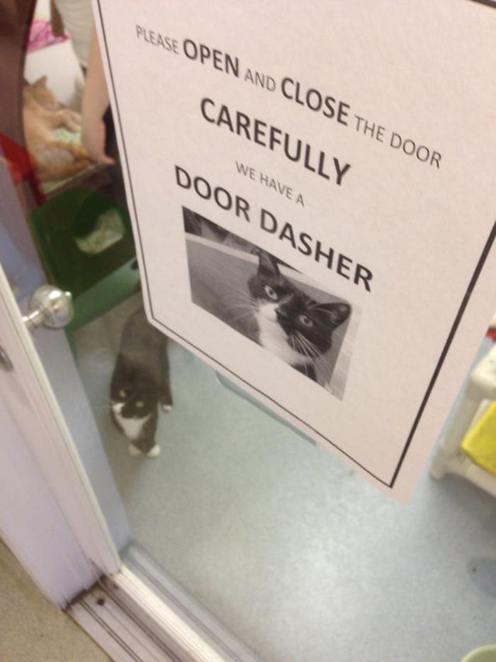 pet owner warning sign door dasher kitten