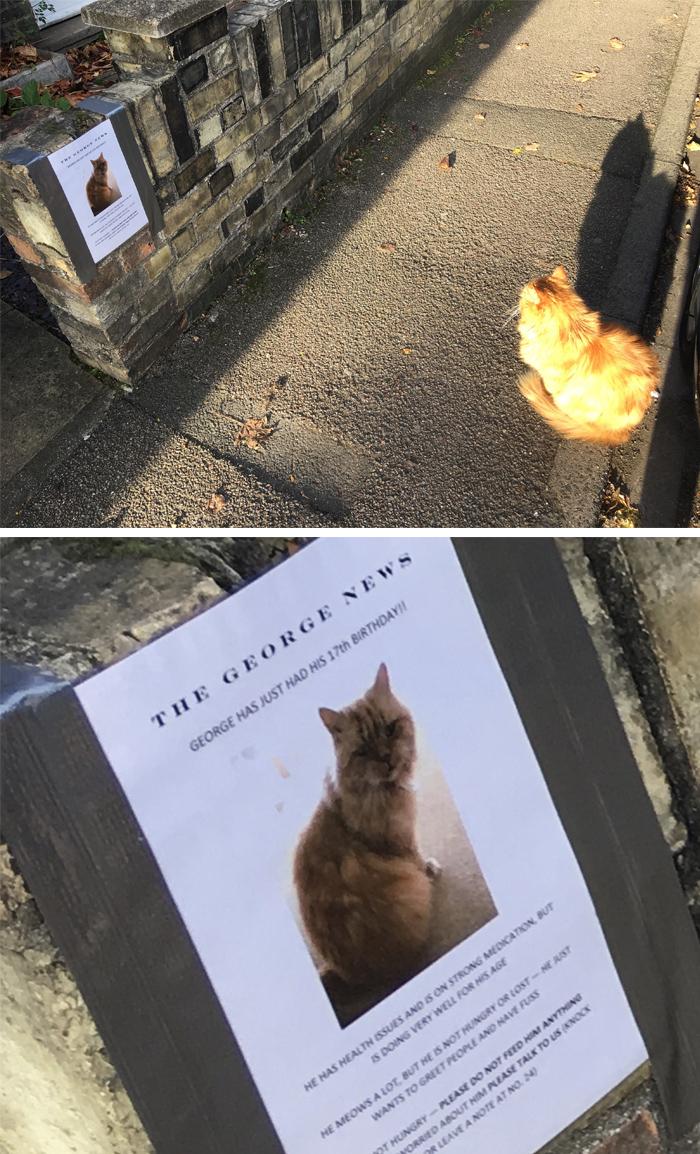 pet owner warning sign feline 17th birthday 1