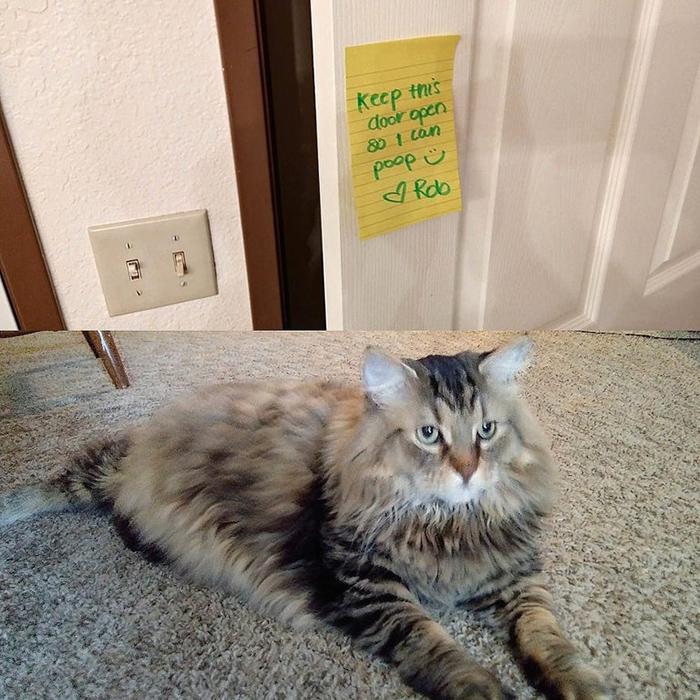 pet owner warning sign keeping door open