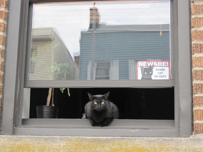 pet owner warning sign kitten guard on duty