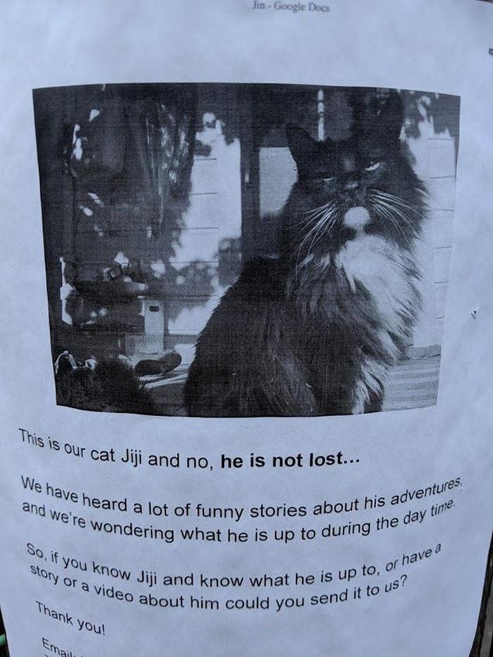 pet owner warning sign kitten not lost