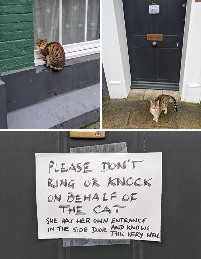 pet owner warning sign knocking on behalf of cat