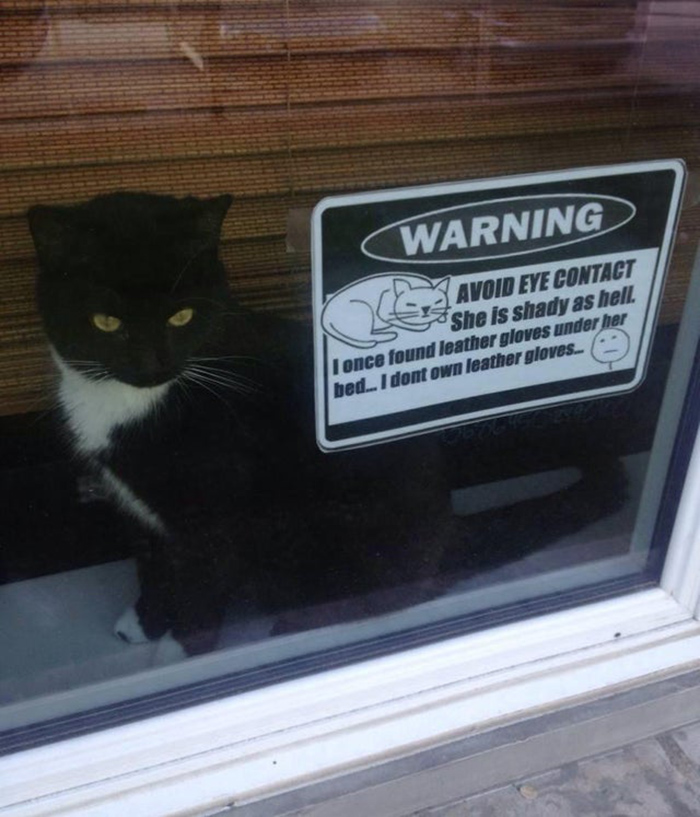 pet owner warning sign making eye contact with cat