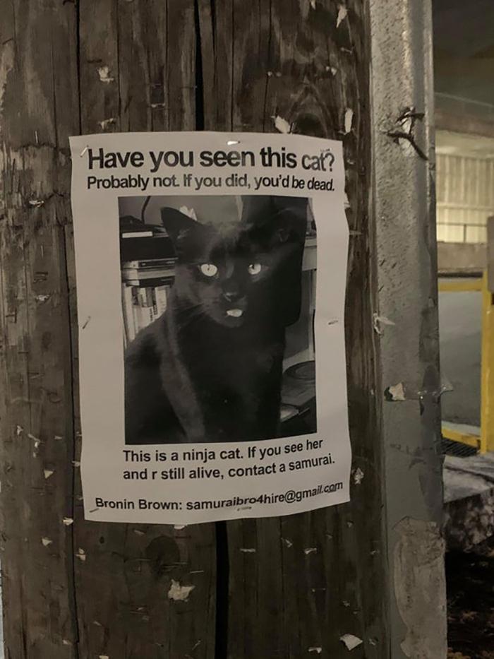 pet owner warning sign ninja kitten