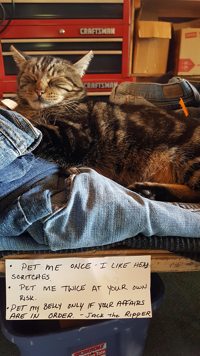 pet owner warning sign petting cat