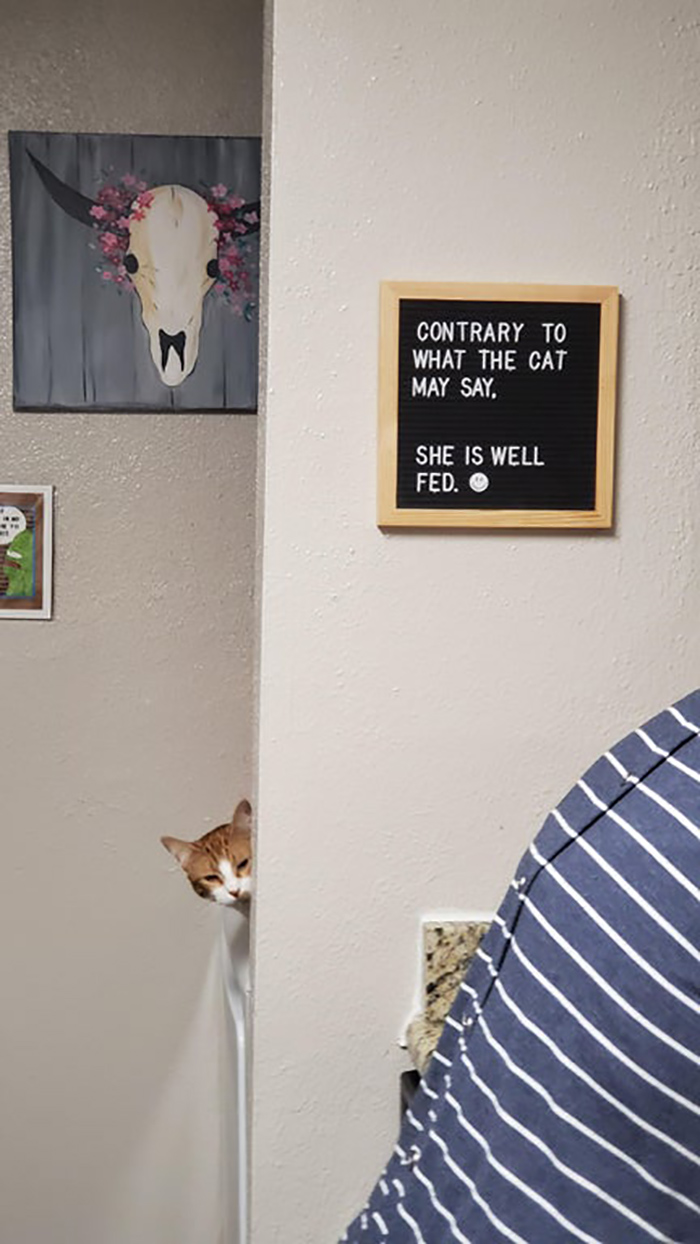 pet owner warning sign well-fed cat