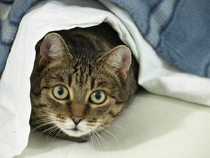 pet owners unintentionally training pets cat going under owner's skirt