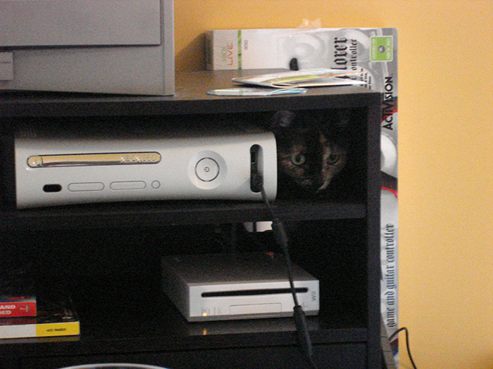pet owners unintentionally training pets cat opening xbox disc tray