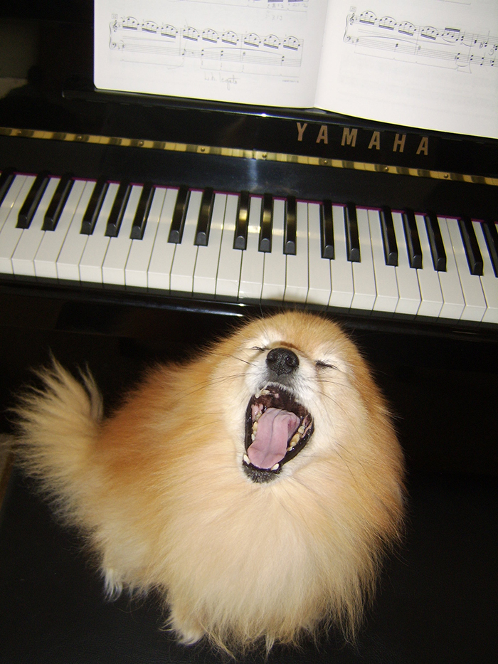 pet owners unintentionally training pets dog singing