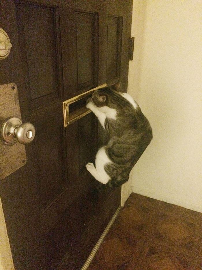 pets stealing owners' partners cat peeking through door mailbox waiting for owner's boyfriend