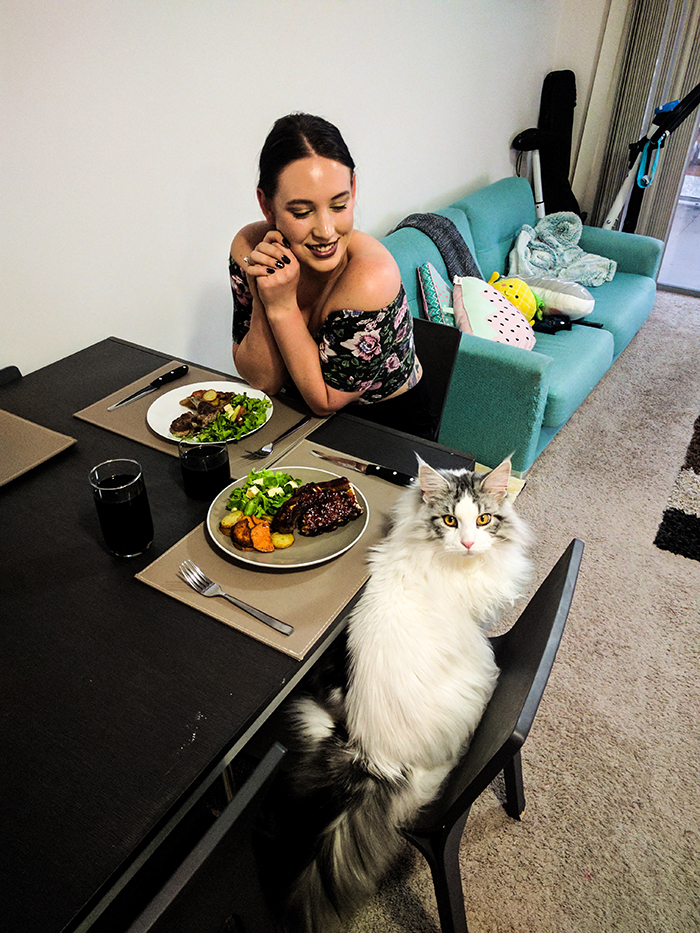 pets stealing owners' partners cat sitting at dining table with owner's girlfriend