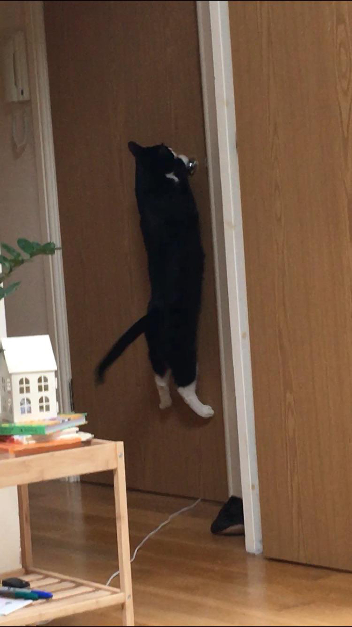 pets stealing owners' partners cat trying to open door