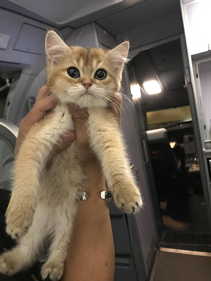 pets traveling cat first passenger on plane