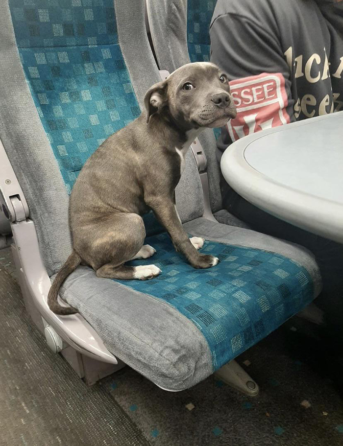 pets traveling dog first train trip
