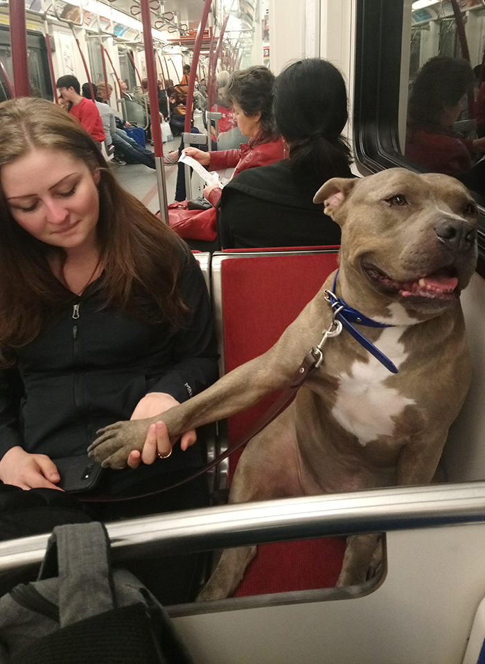 pets traveling dog holding owner's hand while on subway