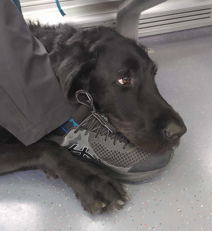 pets traveling dog hugging owner's feet while on train