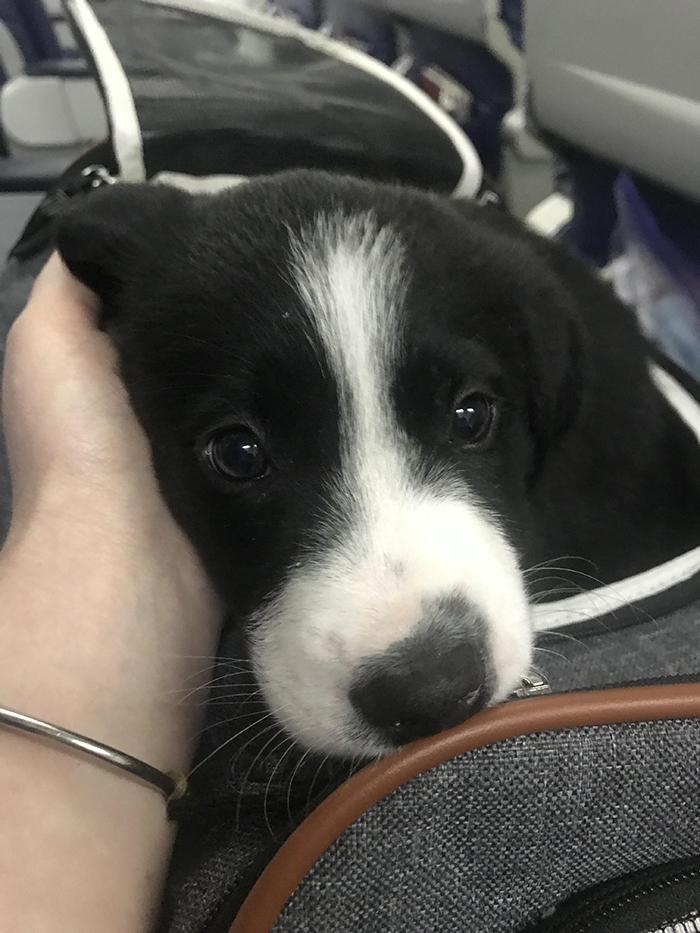 pets traveling dog on 13-hour flight