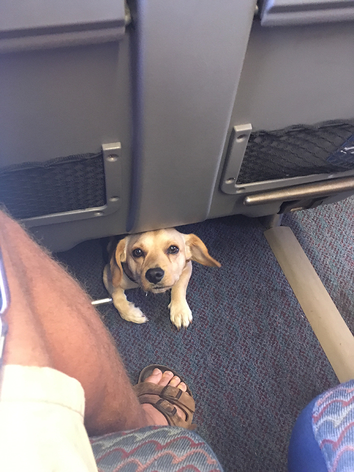 pets traveling dog peeking out from under train seat