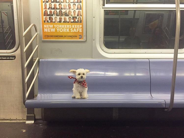 pets traveling dog sitting on train seat