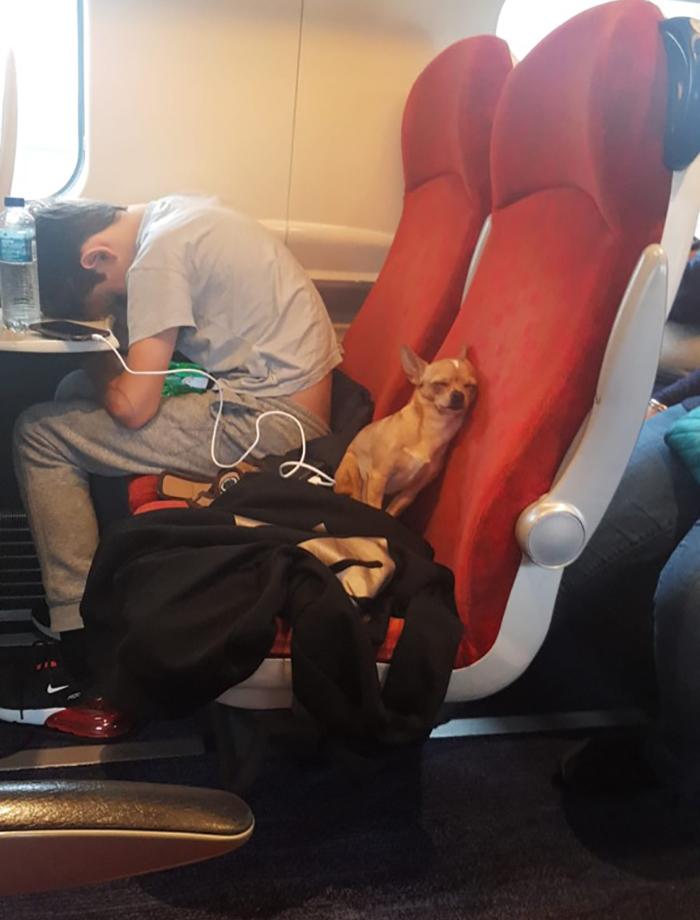 pets traveling dog sleeping on train
