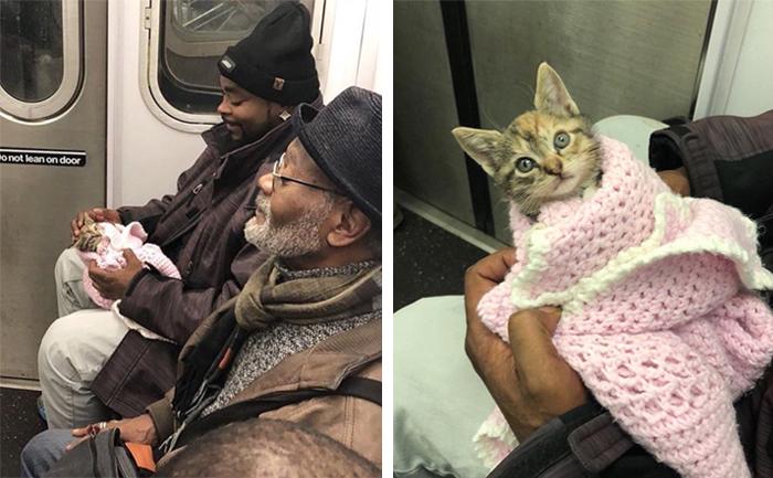 pets traveling kitten on subway