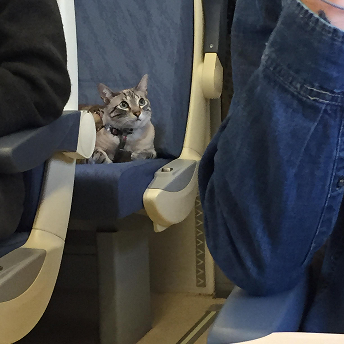 pets traveling kitten with own seat on train