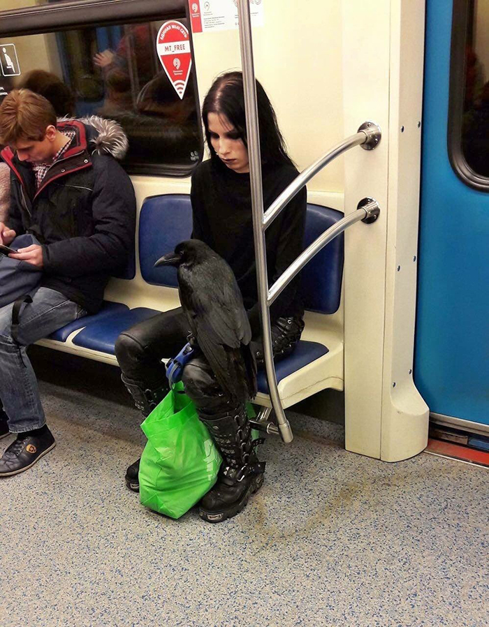 pets traveling lady with raven on running subway