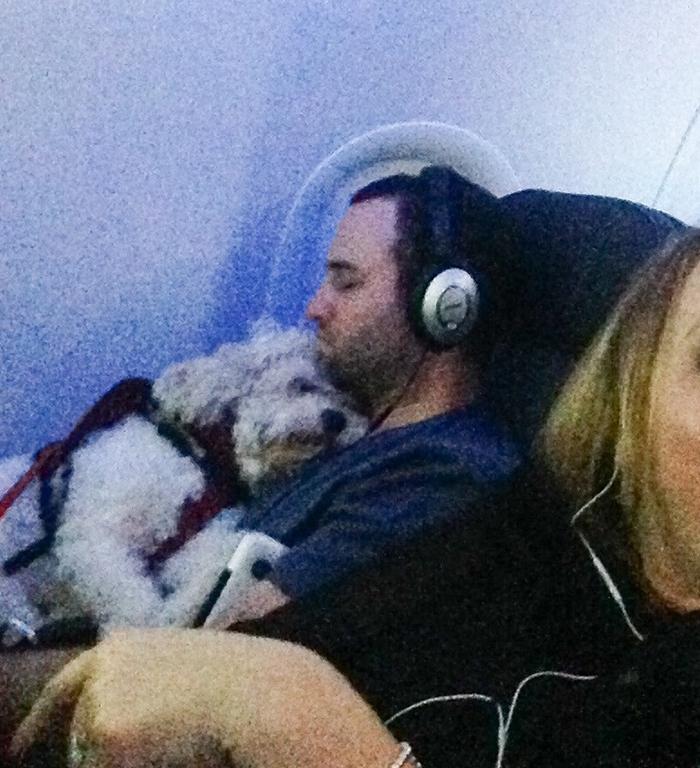 pets traveling man sleeping on plane while hugging his dog