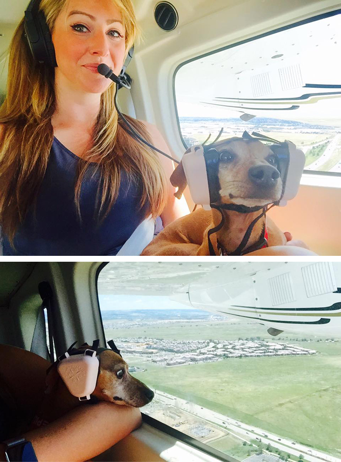 pets traveling puppy on first flight