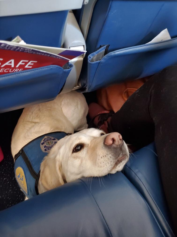 police trauma dog on plane