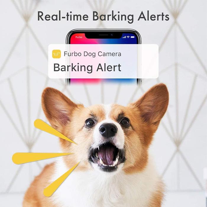 real time barking alerts